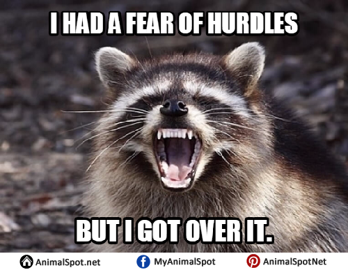 Funny pun raccoon memes