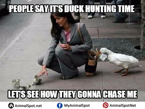Duck Memes