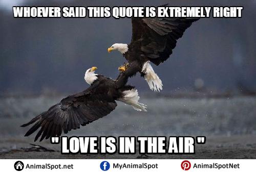 Funny Bald Eagle Memes bald eagle memes
