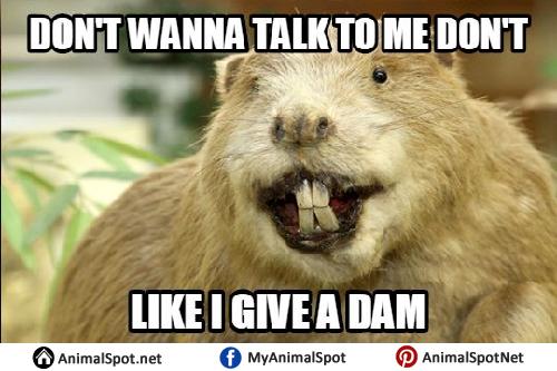 Funny Memes For Kids Animals : Beaver memes