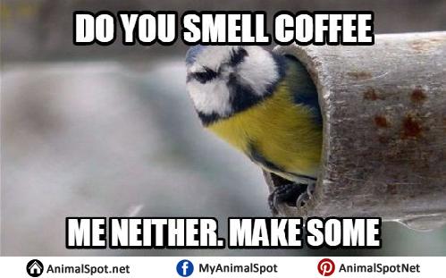 Funny Bird Memes funny bird memes png