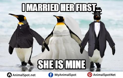 Funny Penguin Meme penguin memes,Cute Penguin Meme