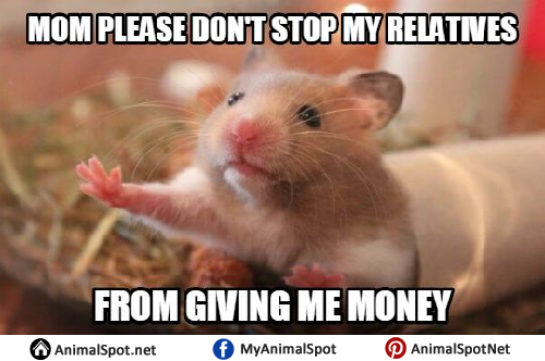 hamster memes