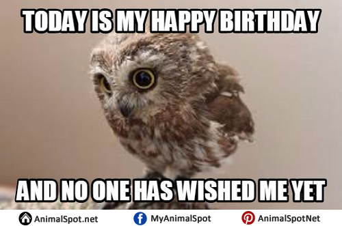 Happy Birthday Owl Meme owl memes