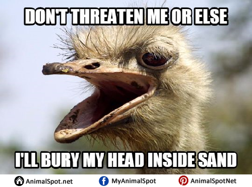 https://www.animalspot.net/wp-content/uploads/2017/04/Images-of-Ostrich-Memes.png
