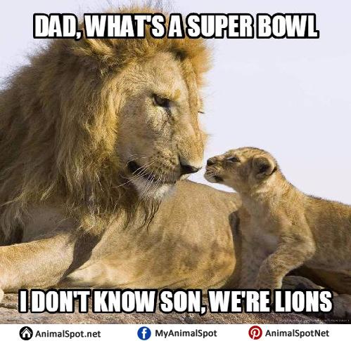 Lion drinking water meme