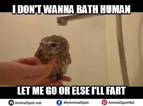 Meme Owl owl memes