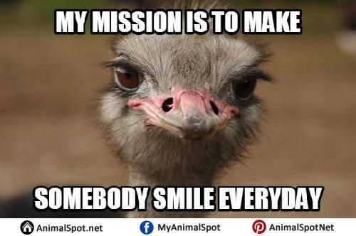 Ostrich Memes