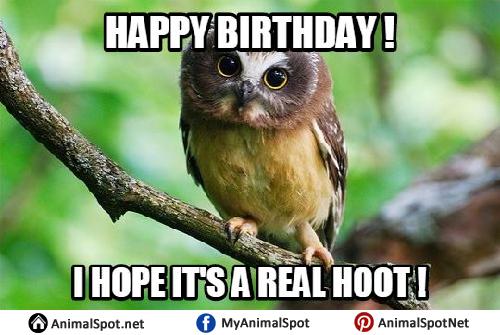 Owl Birthday Meme owl memes