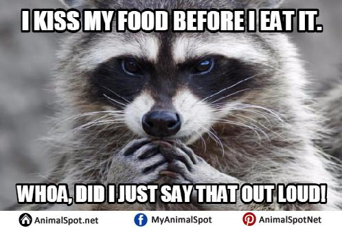 Raccoon Memes raccoon memes