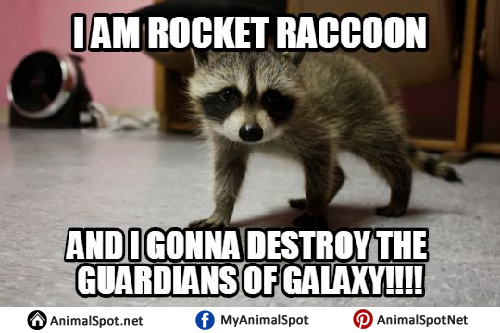 Rocket Raccoon Memes raccoon memes