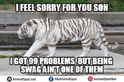 Funny Zoo Memes : White tiger memes.png