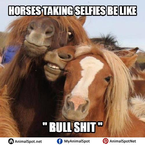 Horse meme soon - photo#25