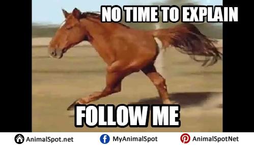 Horse meme soon - photo#28