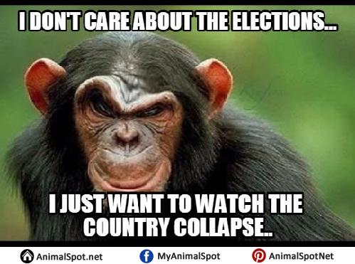 Images of Monkey Memes monkey memes