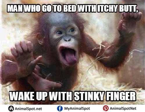 Meme Monkey meme monkey png
