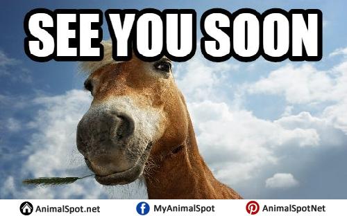 Horse meme soon - photo#8