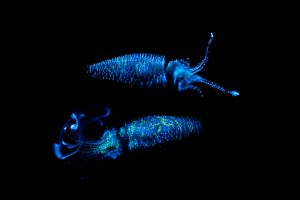 Invertebrates - Facts, Characteristics, Anatomy and Pictures