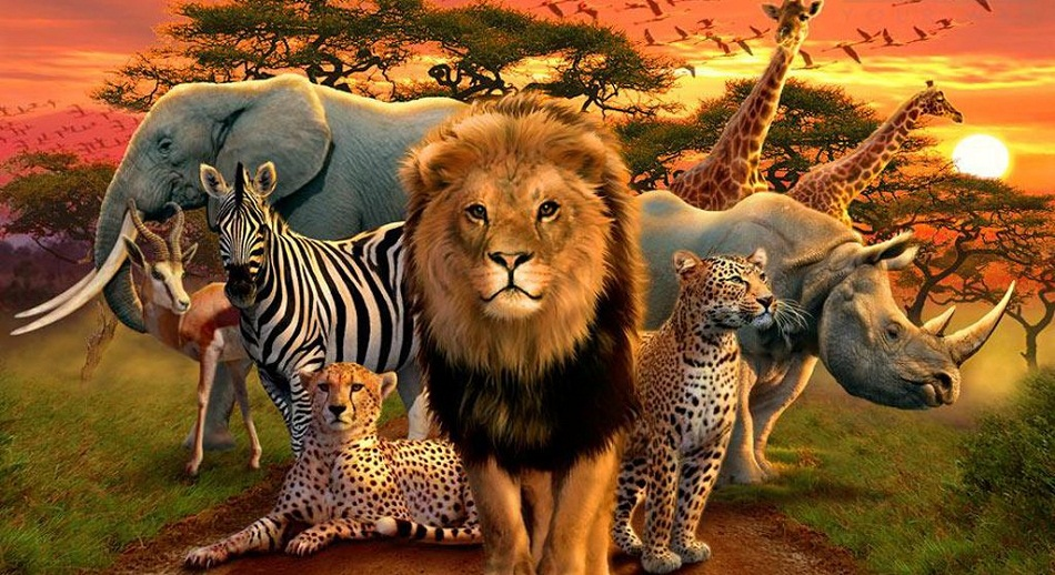 African Animals List, Facts, Conservation Status, Pictures