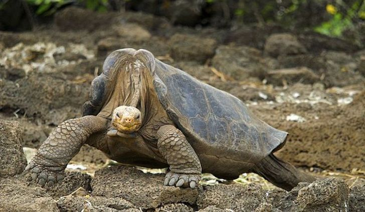 Galapagos Islands Animals List Facts And Pictures