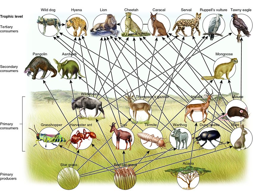 Grassland Animals List Facts Adaptations Pictures