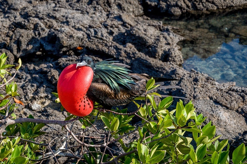 the astounding adaptations of organisms on the galapagos islands Though nesting on islands keeps  of these adaptations, how organisms in general maintain a  entire 25 hour migration, which is just astounding.