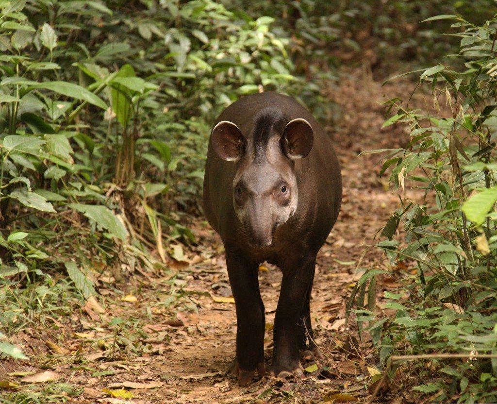 Amazon Rainforest Animals List, Conservation, Pictures