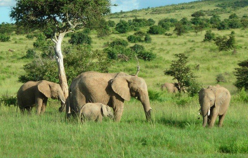 How Do African Elephants Eat Their Food