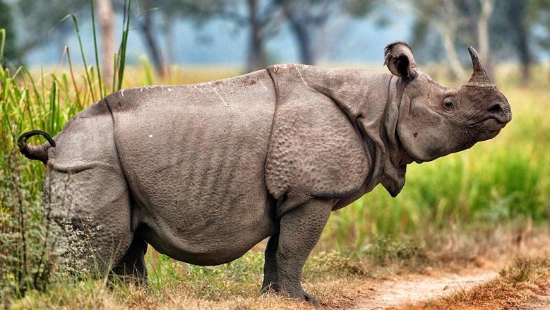 javan rhino predators