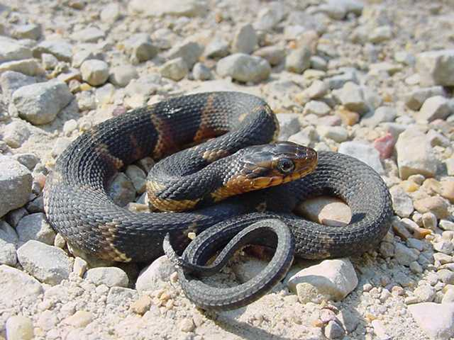 water, Animals, Snakes Wallpapers HD / Desktop and Mobile ... |Snake Like Water Animals