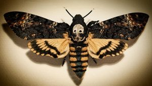 Death/'s-Head HawkMoth Patch ~ Acherontia Lachesis ~ Silence Of The Lambs