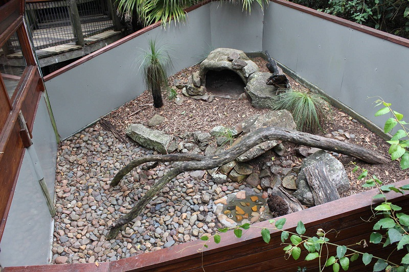 Lace Monitor Facts, Habitat, Diet, Life Cycle, PicturesLace Monitor Enclosure