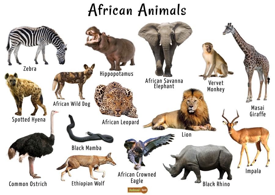 African Animals List Facts Conservation Status Pictures