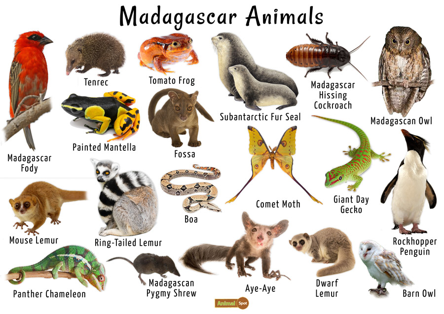 Madagascar-Animals-Images.jpg