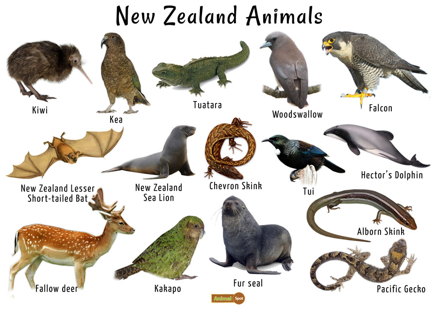 New Zealand Animals List Conservation Pictures