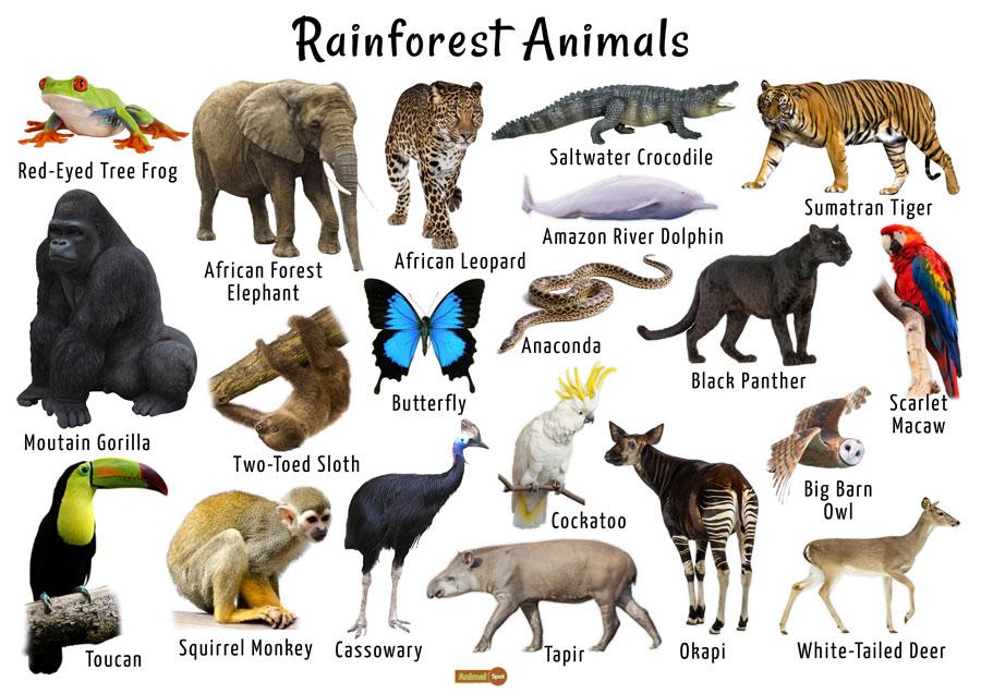 Rainforest Animals List, Adaptations, Pictures
