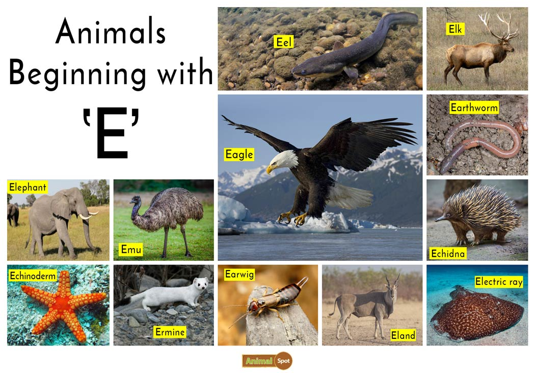 Animals that Start with the Letter E