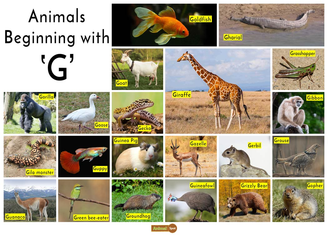 Animals that Start with the Letter G