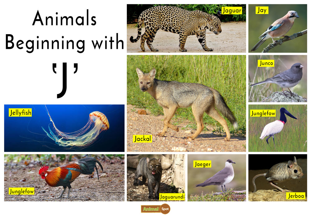 Animals that Start with the Letter J