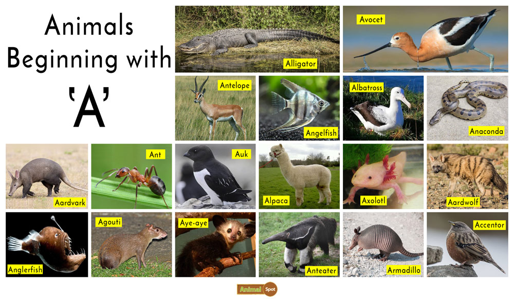 Animals that start with the Letter A
