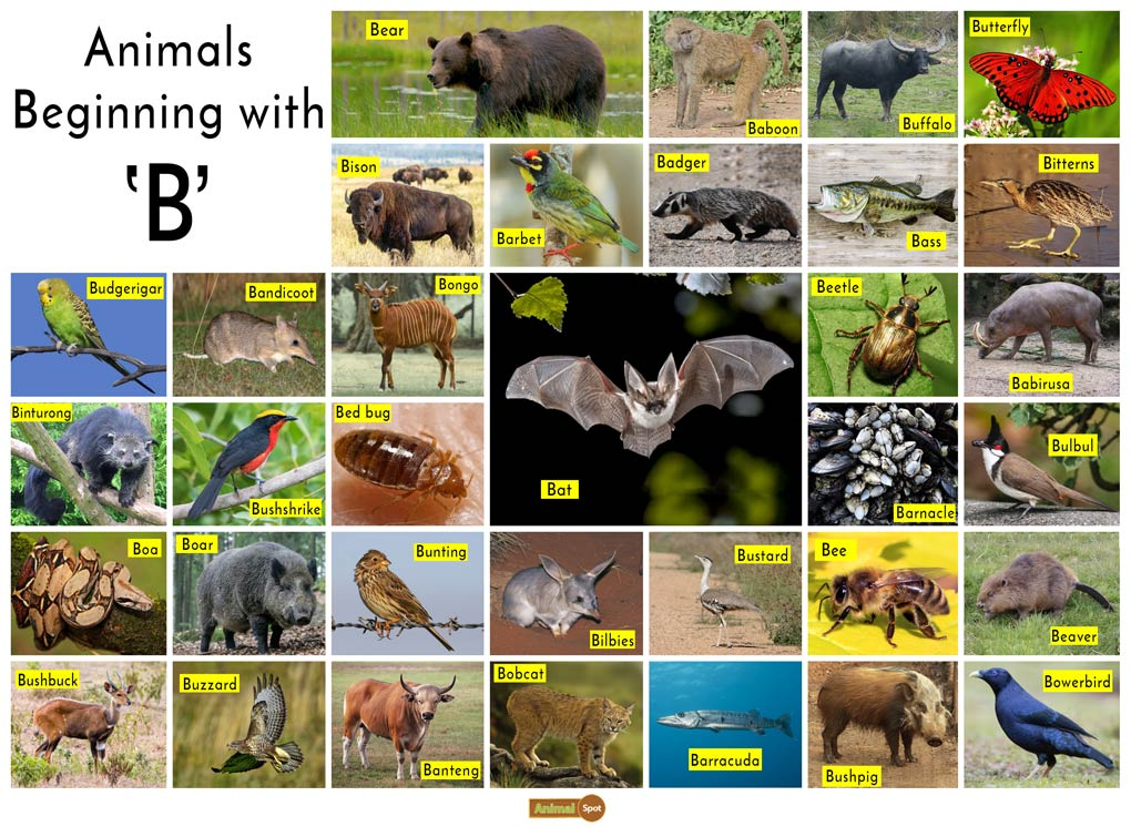 Animals that start with the Letter B