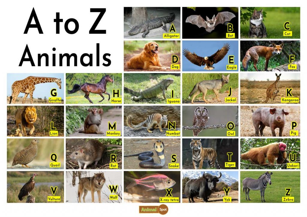 A to Z Animals