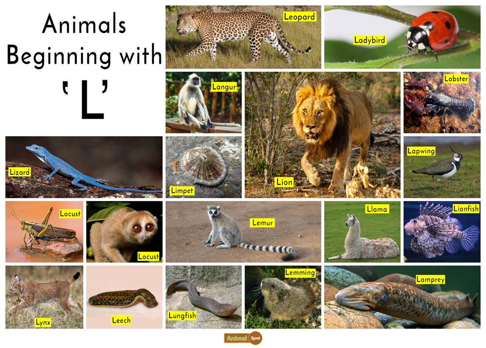 Animals that Start with the Letter L