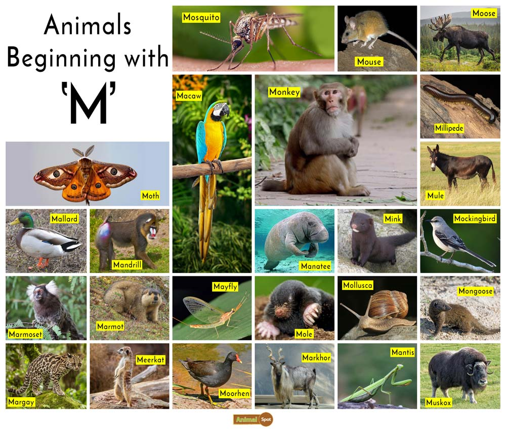 Animals that Start with the Letter M