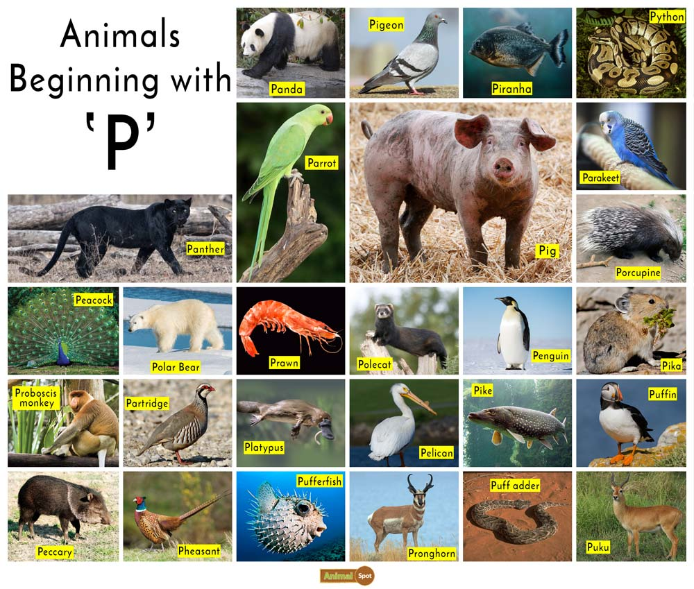 Animals that Start with the Letter P