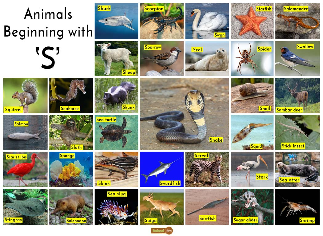 Animals that Start with the Letter S