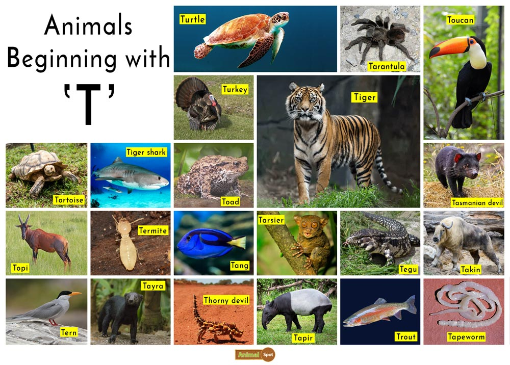 Animals that Start with the Letter T