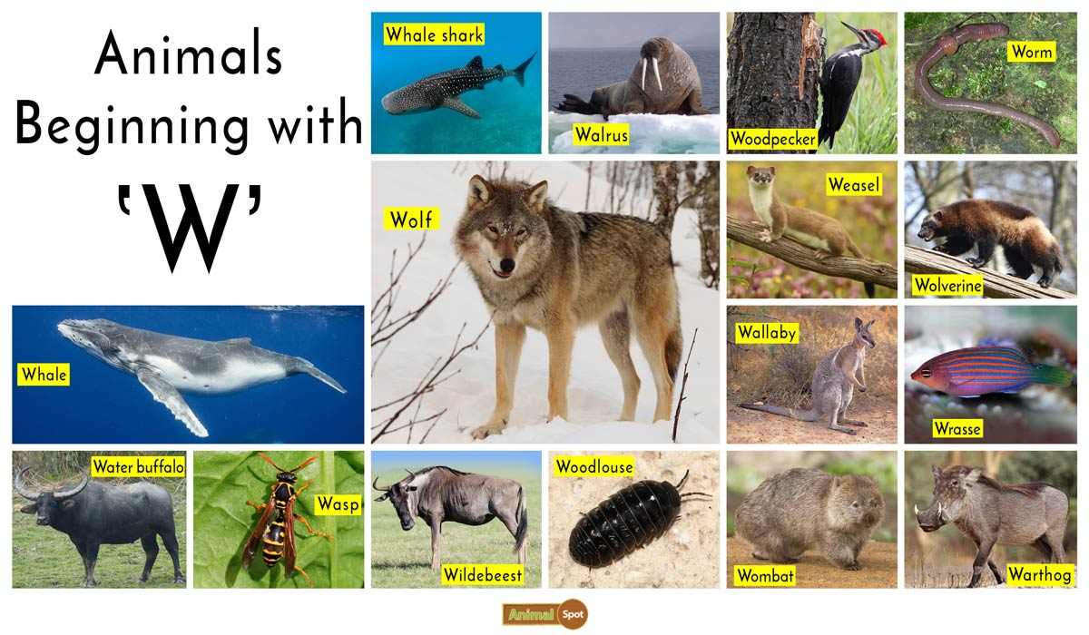 Animals that Start with the Letter W