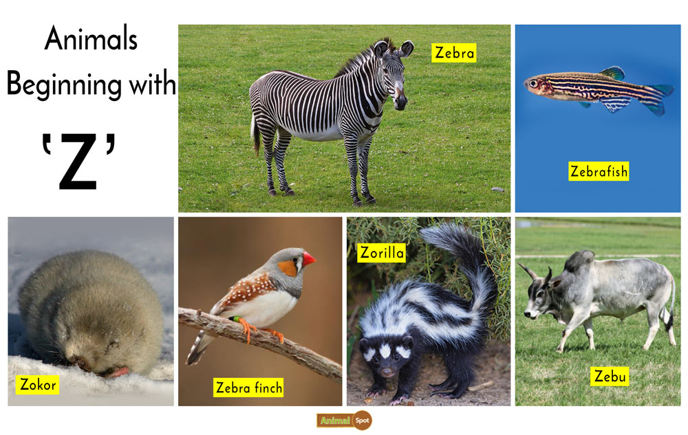 Animals that Start with the Letter Z